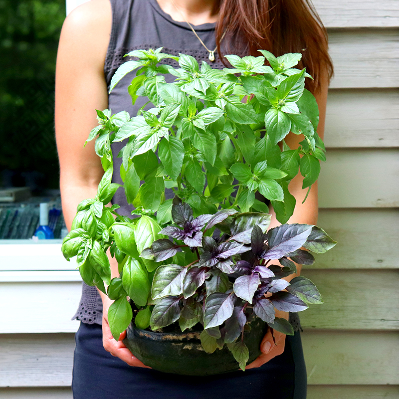Grown your own herbs, salad or pesto to enjoy in your meals.