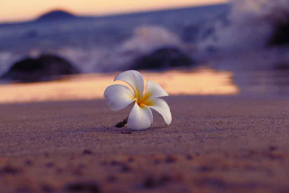 eleonora-patricola-510330-unsplash.jpg