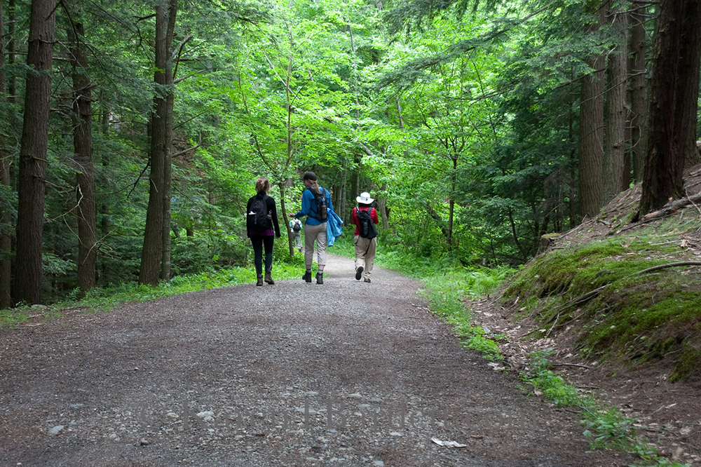 New life Hiking Spa offers hikes for all skill levels.