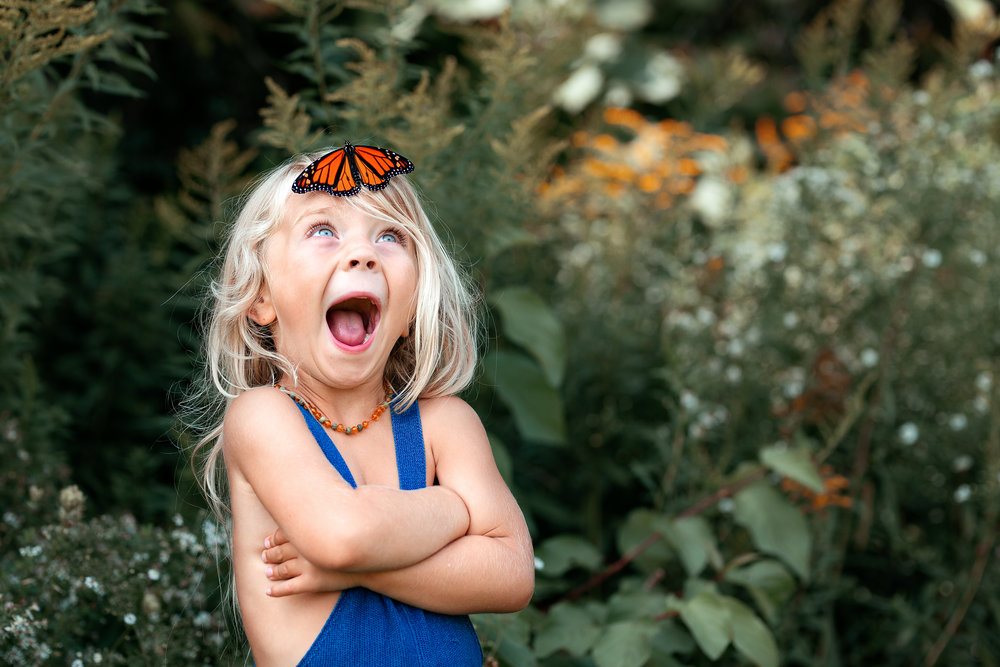 August-2018_Monarchs-1c.jpg