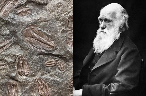 Darwin-fossils-600x450.jpg