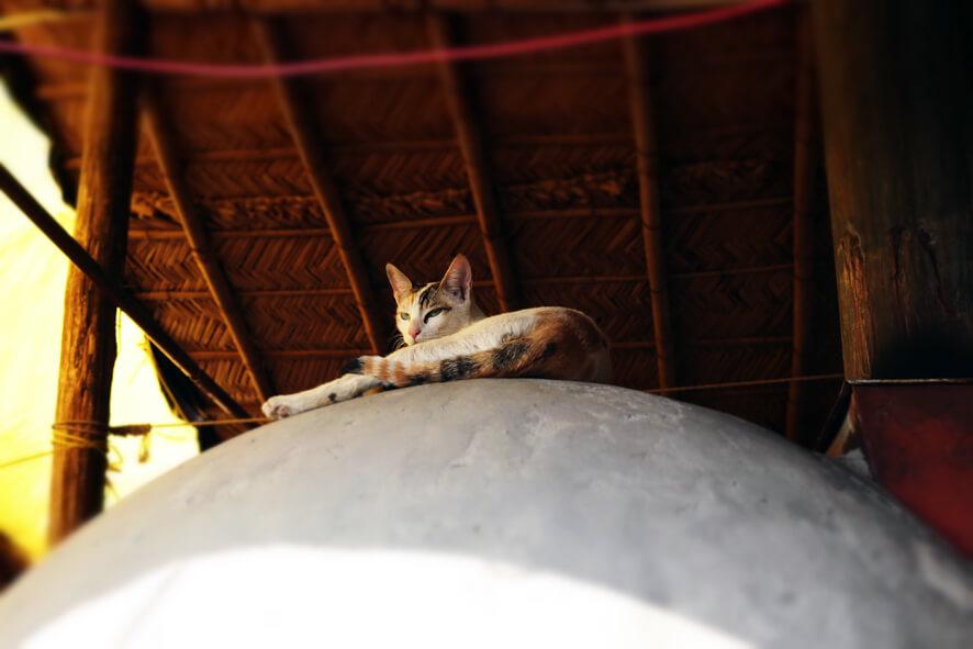 A Tavola Con te Cat.JPG