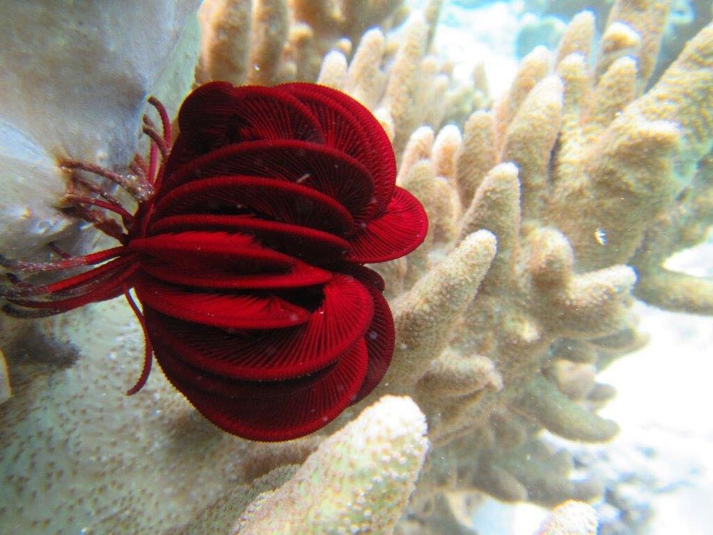 Raja Ampat Snorkeling - Eco Snorkeling - What to do - Activities at the MahaRaja Eco Dive Lodge