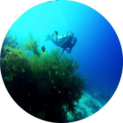 MahaRaja Eco Dive Lodge Activities Eco Diving