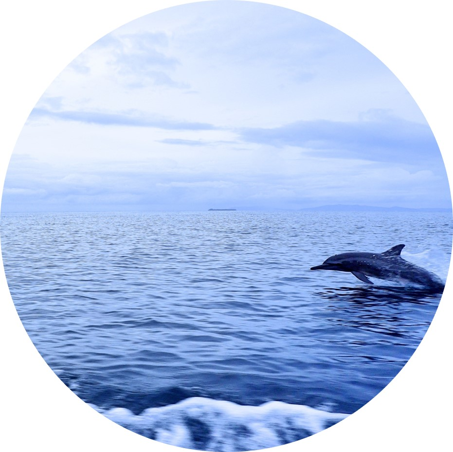Dolphins in Raja Ampat- Amazing Sea Life at the MahaRaja Eco Dive Lodge -