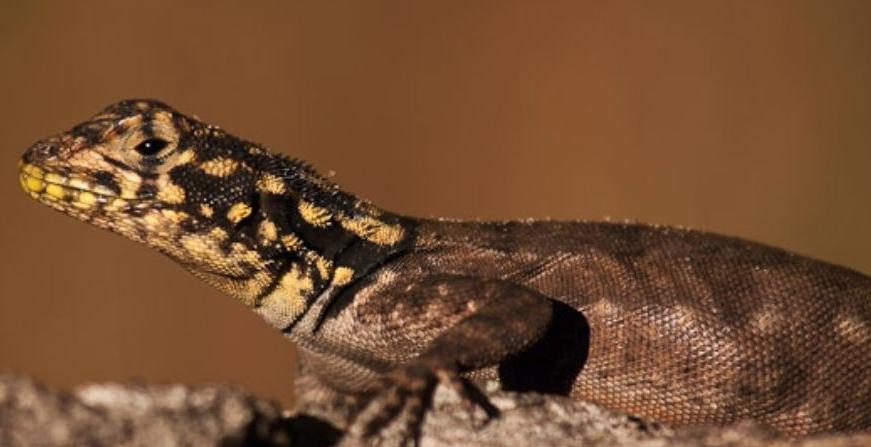 NEWS lizard 1.JPG