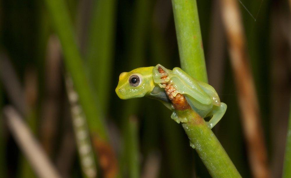 NEWS biodiversity hotspot.JPG