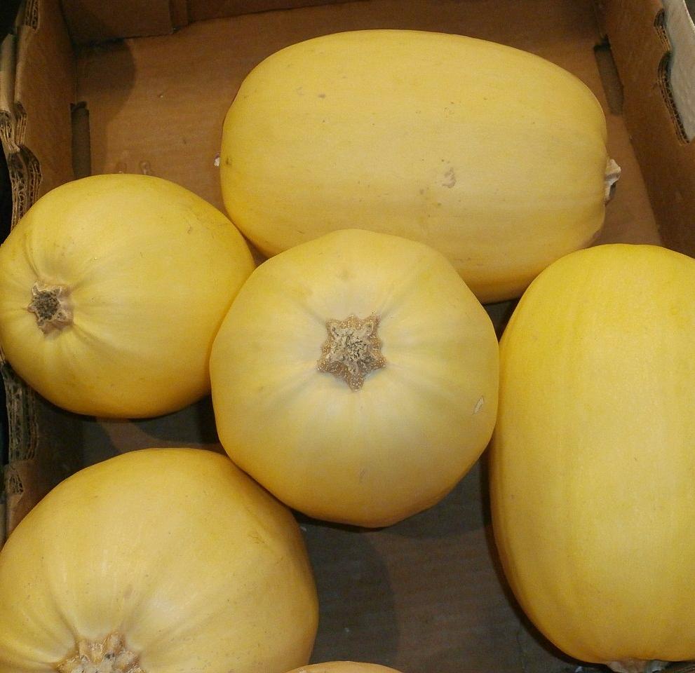 La spaghetti - est ovale, blanche à jaune ambrée. Plus intéressante pour sa texture que pour son goût, sa chair (après cuisson) se défait en filaments rappelant les spaghettis. A préparer en gratin végétal ou alla carbonara !