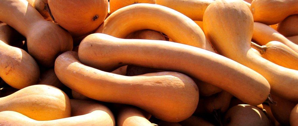 La longue de nice - et la tromboncino ont une chair ferme, orange clair, sucrée, au goût musqué, de très bonne qualité (proche de la muscade et de la sucrine). Elles se dégustent râpées, dans des blinis, en chutney, ou en chips.