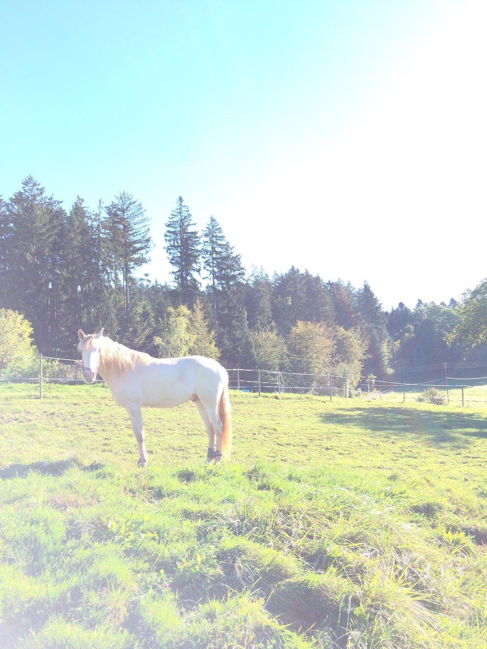 Sunlight white horse.jpg