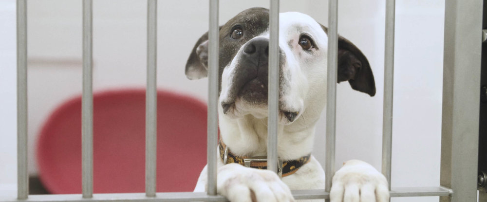 Dogs Home - Documentary