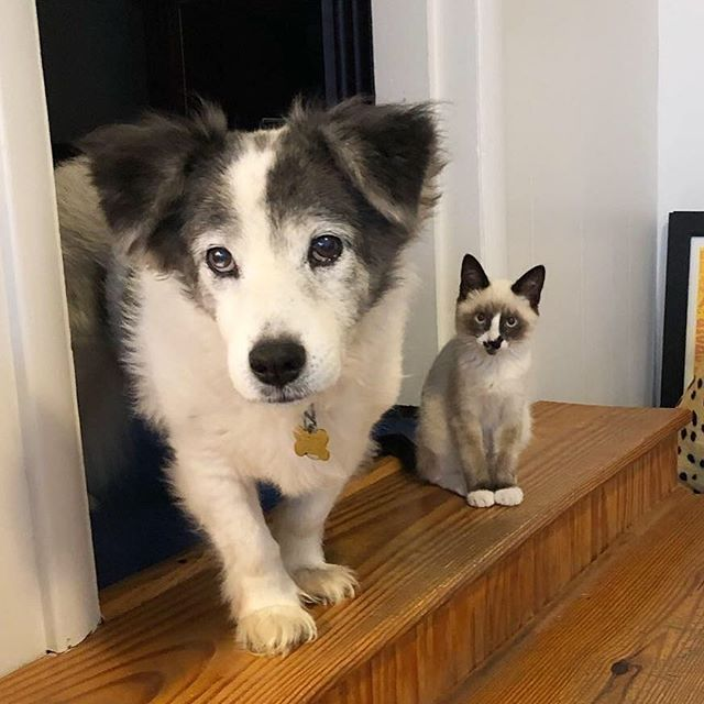 I mean, did you think I was going to start a podcast and NOT talk about these two? Episode 4 of @fridaynightnoods is out TODAY. It's a short minisode on our PodPets. 🐾