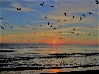 Carollee sunrise dec 9.jpg