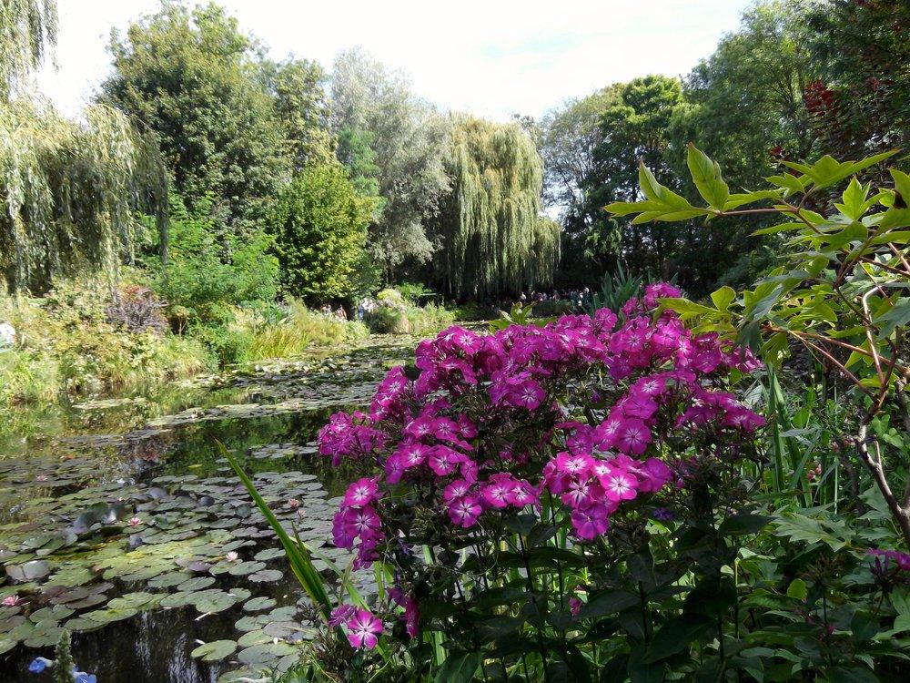 Monet's pond.jpg