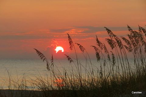carollee sunrise_n.jpg