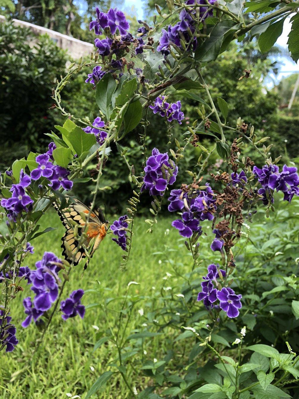 1212 Butterfly .jpg