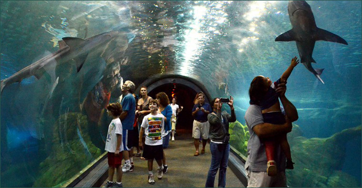 Adventure-Aquarium.jpg