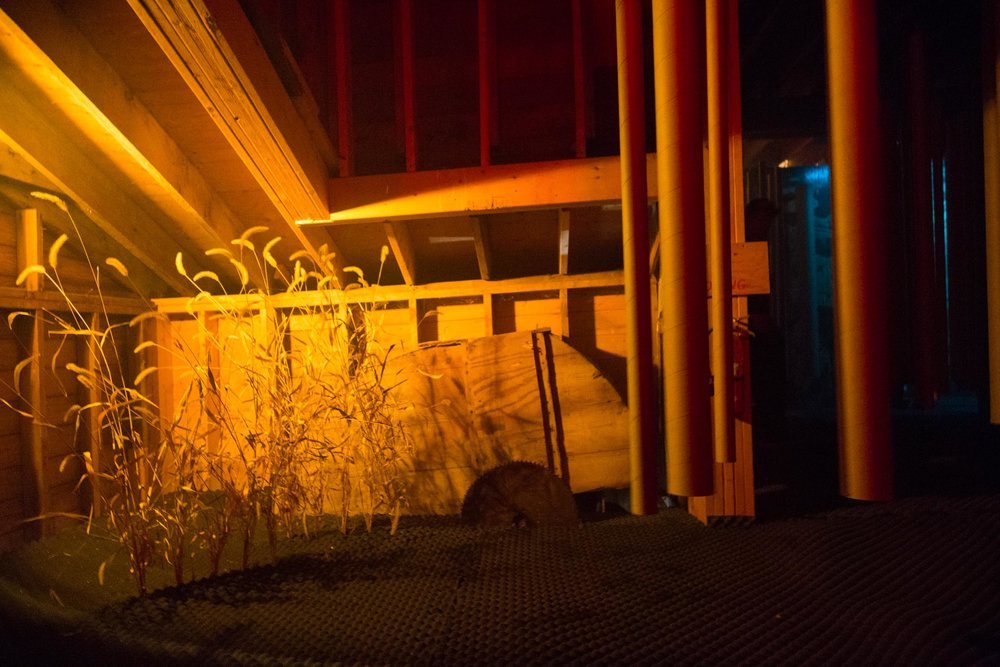 wassaic-project-haunted-mill-2017-10-28-19-40-46.jpg
