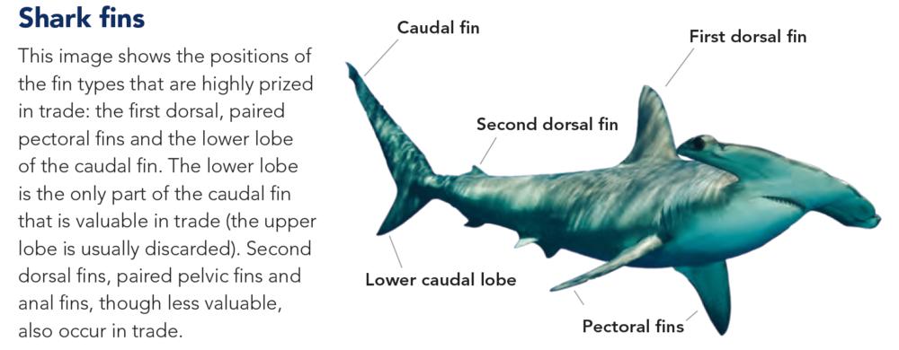 Shark Fin Diagram - Electrical Drawing Wiring Diagram •