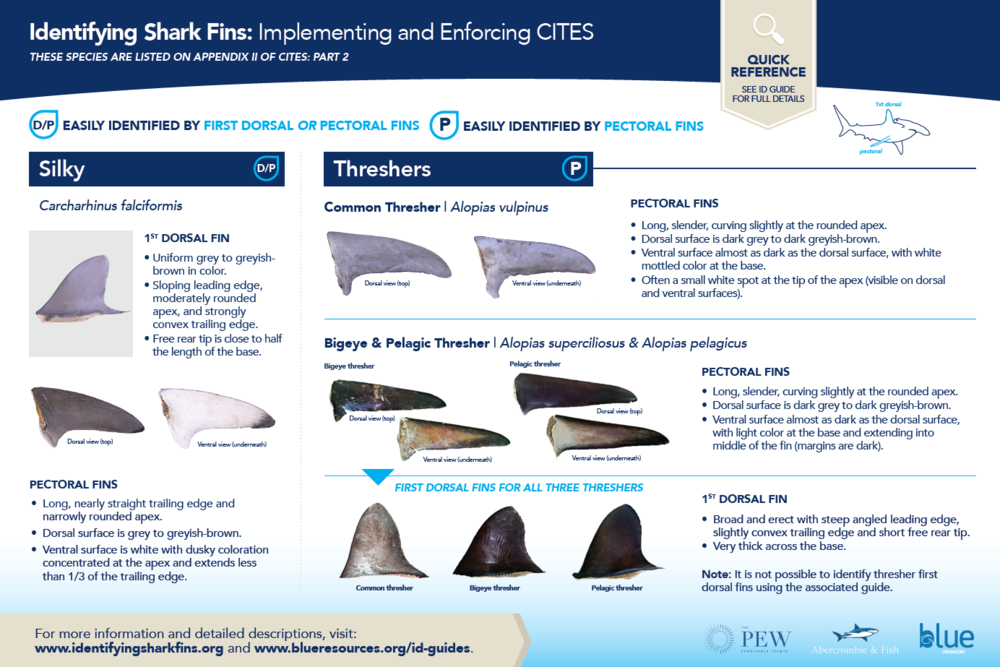 - Poster 2 shows the easiest methods for identifying silky dorsal and pectoral fins and thresher shark (bigeye, common and pelagic) pectoral fins. Note it is not possible to identify the thresher first dorsal fins using this poster and corresponding guide.