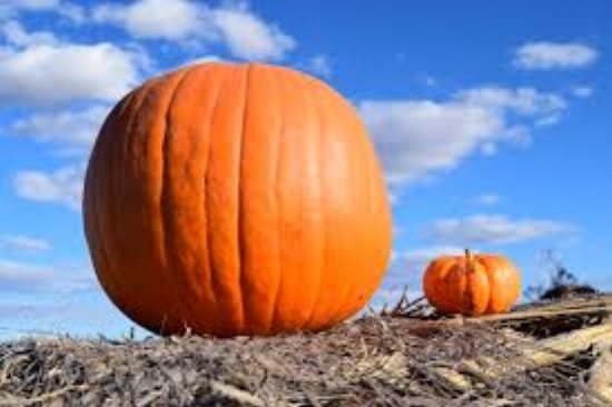 Whether big or small, all pumpkins can write great software equally well.