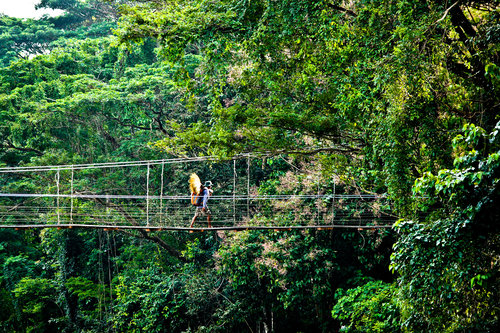 Rainforest_2.jpg
