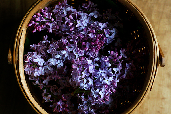 foraged lilac blossoms in basket