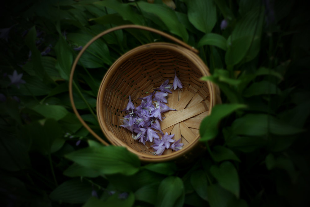 edible flowers and other foraged flora