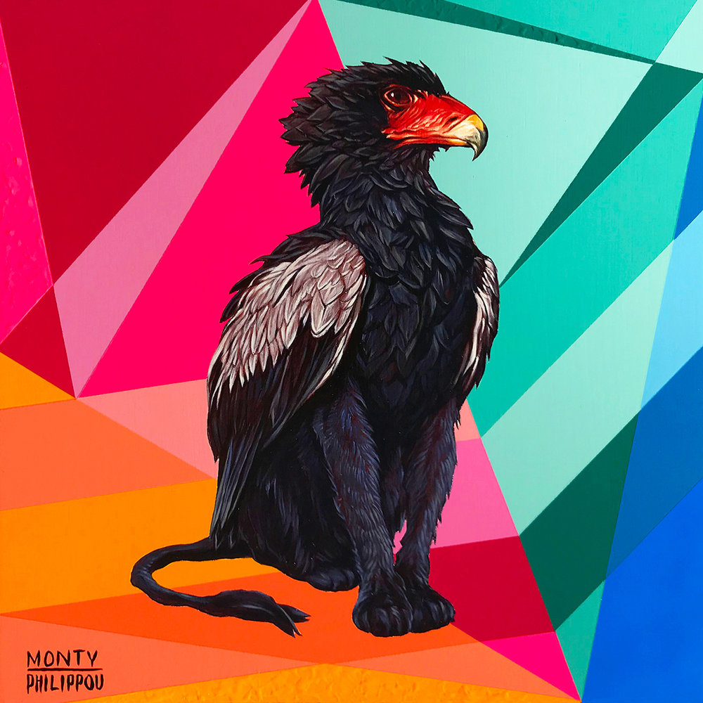 BLACK BATELEUR GRIFFIN