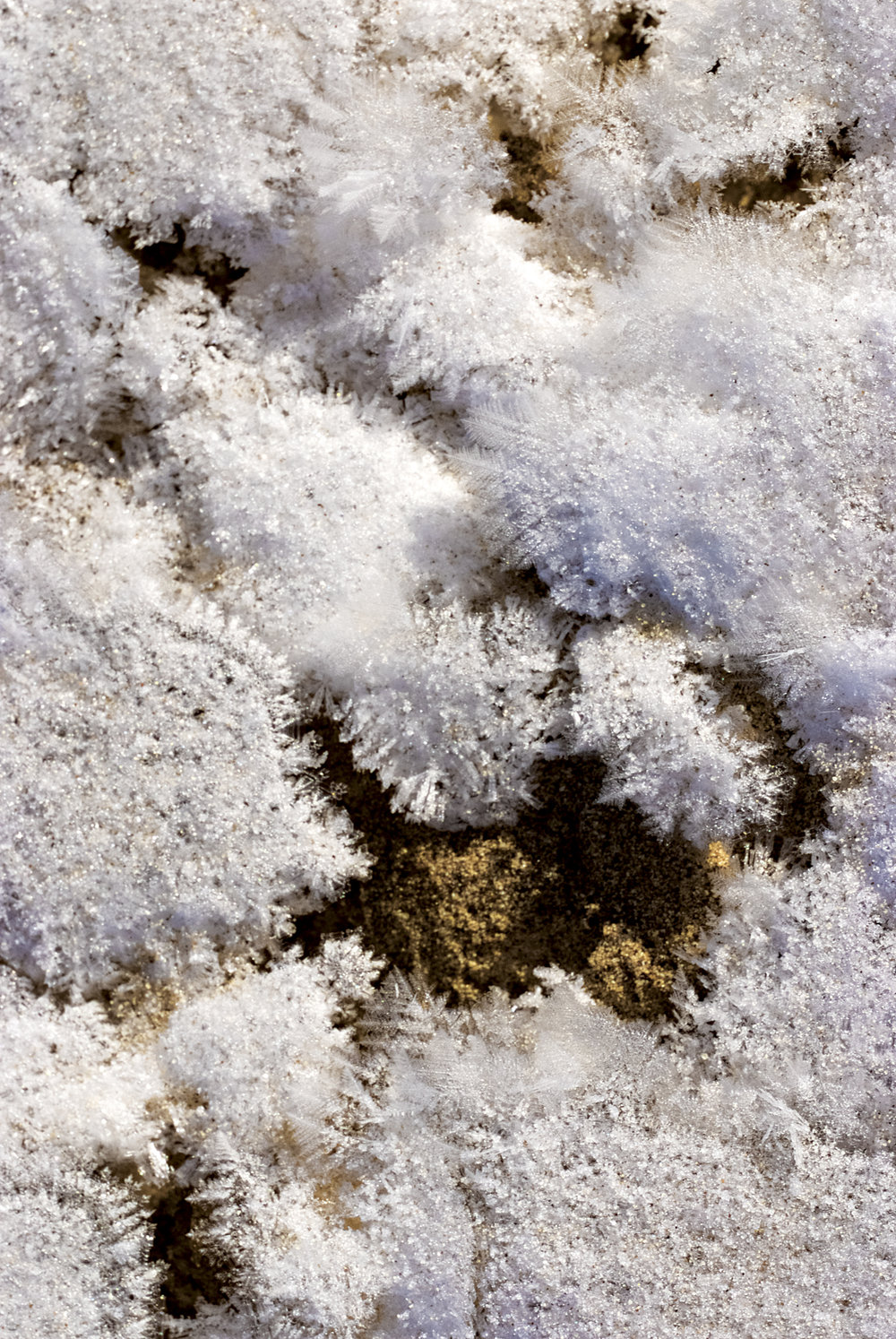 Frost Flowers, Victoria Valley Sands