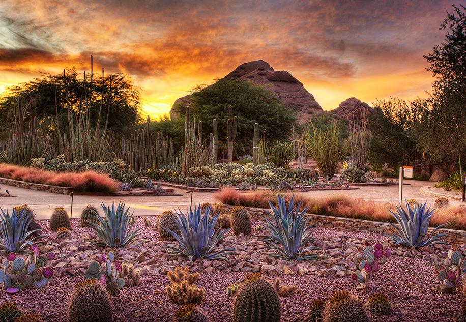 DesertBotGar.jpg