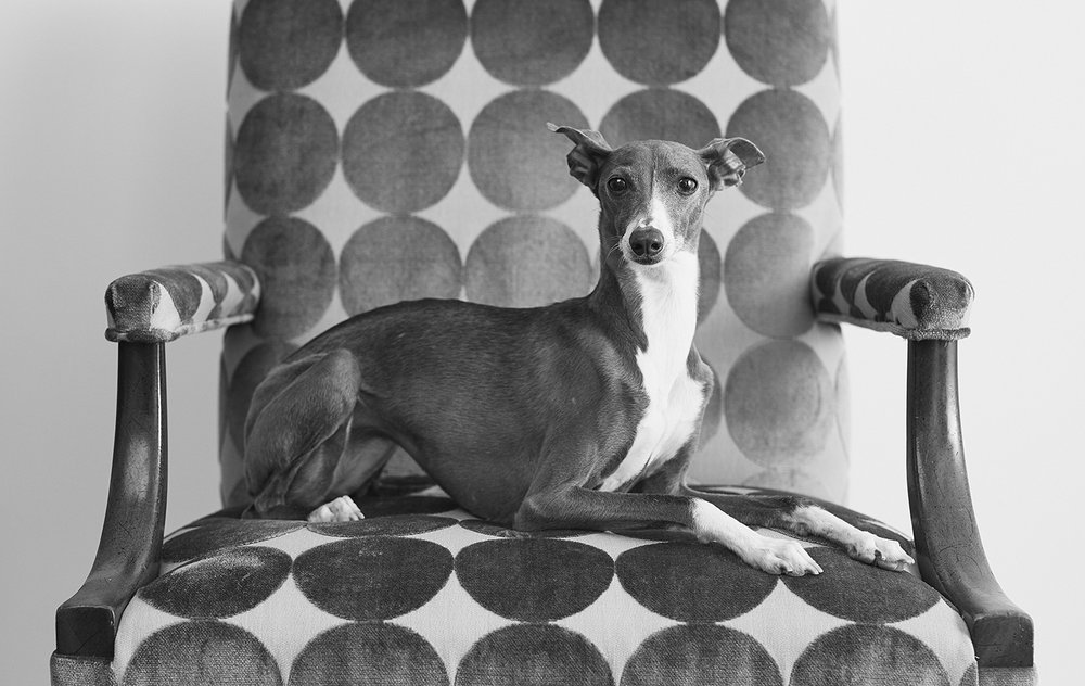 lily_chair_bw_rustywilliams_300.jpg