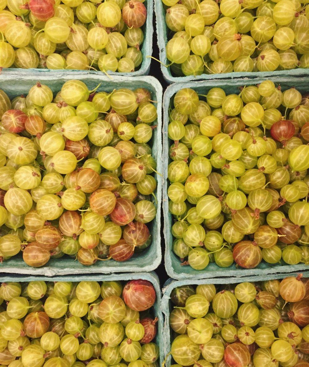 gooseberries I.JPG