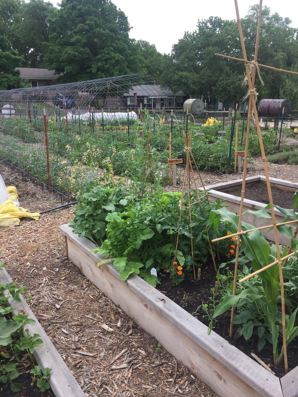 garden I.JPG