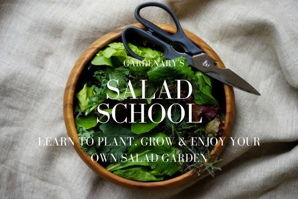 SALAD SCHOOL COVER.jpg
