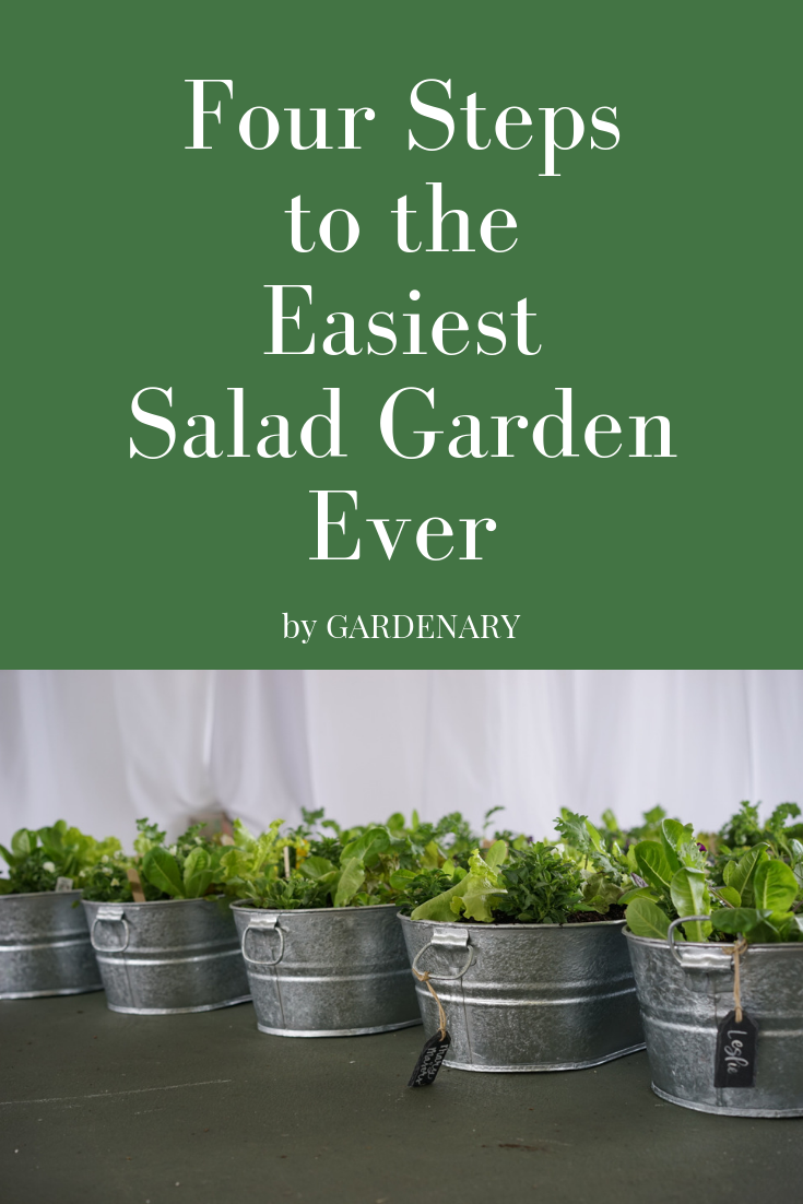 Four Steps to an Easy Salad Garden