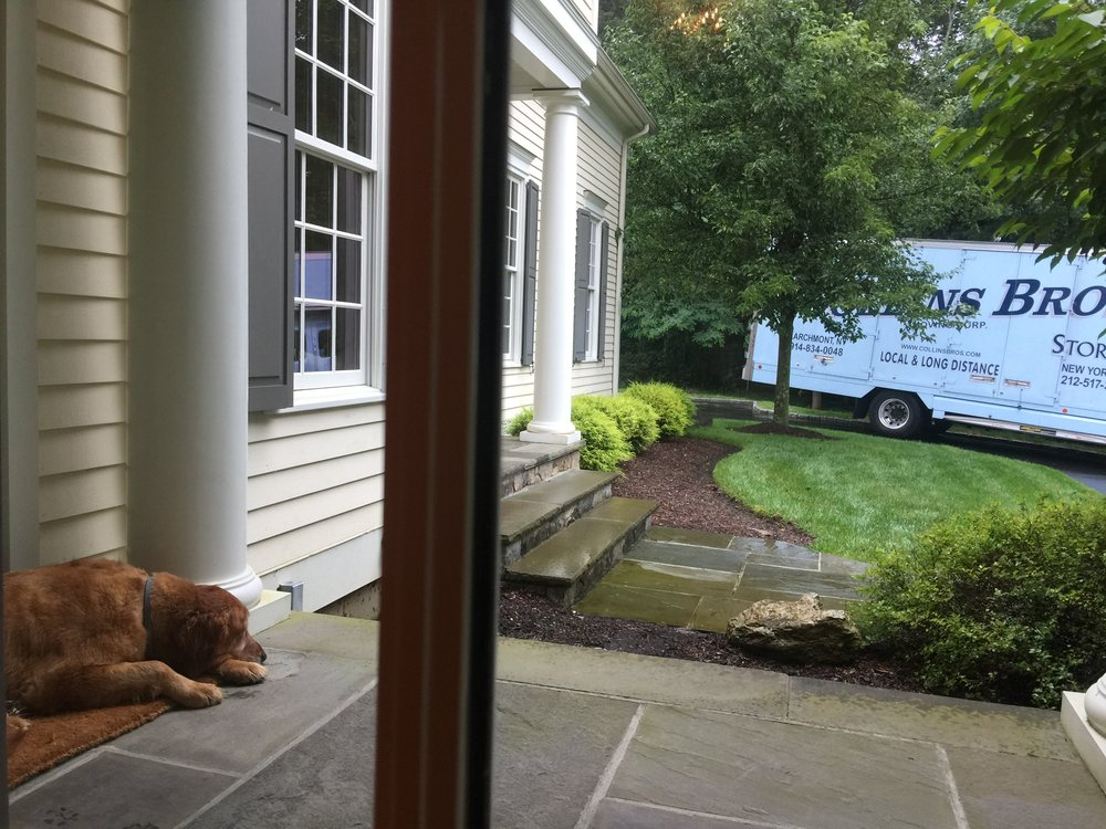 Even my dog Shelby was sad to move...