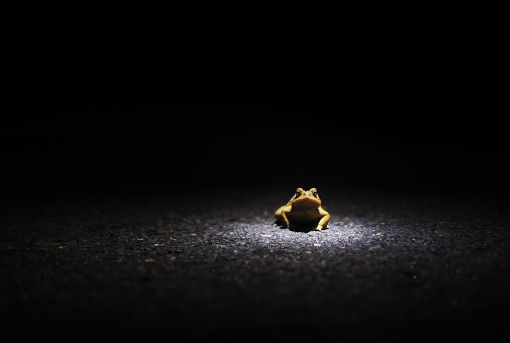 frog1 copy.jpg