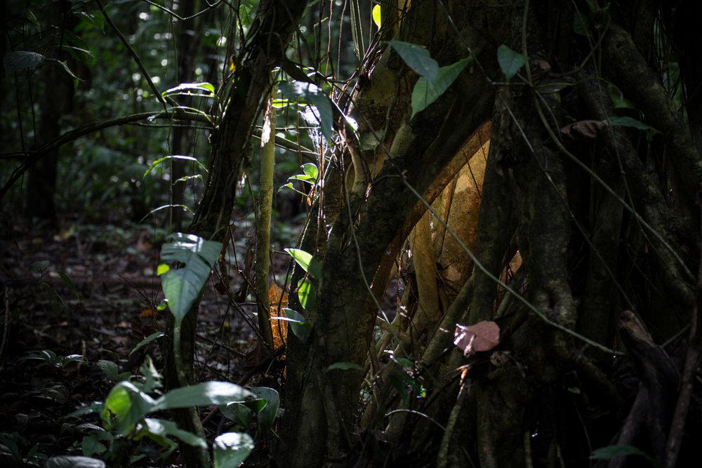 Corcovado National Park // Costa Rica // 2017