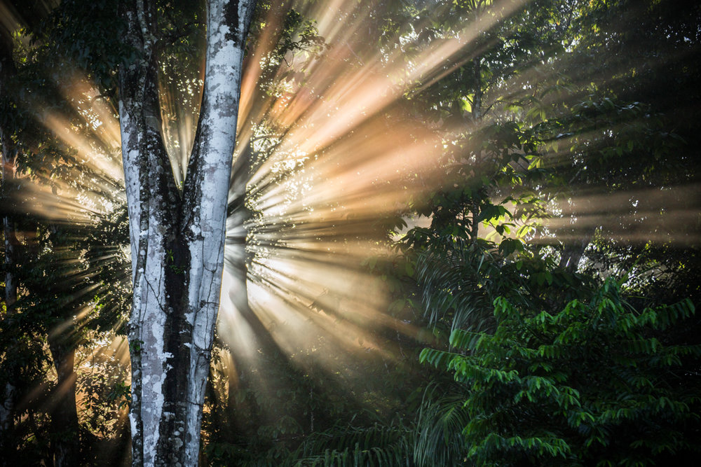 Corcovado National Park // Osa Peninsula, Costa Rica // 2017