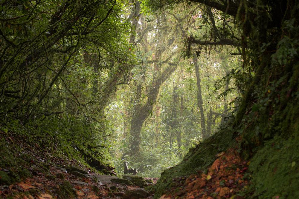 Monteverde National Park // Monteverde, Costa Rica // 2017