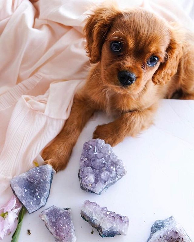 Puppies and crystals...what more do you need!? 🐶💎🦄🌿🌈🔮 Did you know we sell a pet-friendly #cbd oil? Animals react the same to CBD as humans so it can be used for pain, inflammation, anxiety, and much more! Plus pets love the coconut flavor of it!  Shop our hemp selection and much more.  Open Monday - Saturday 12pm - 6pm  1709 White Settlement Rd.  Fort Worth, TX  Online ordering available: Holistichempcompany.com