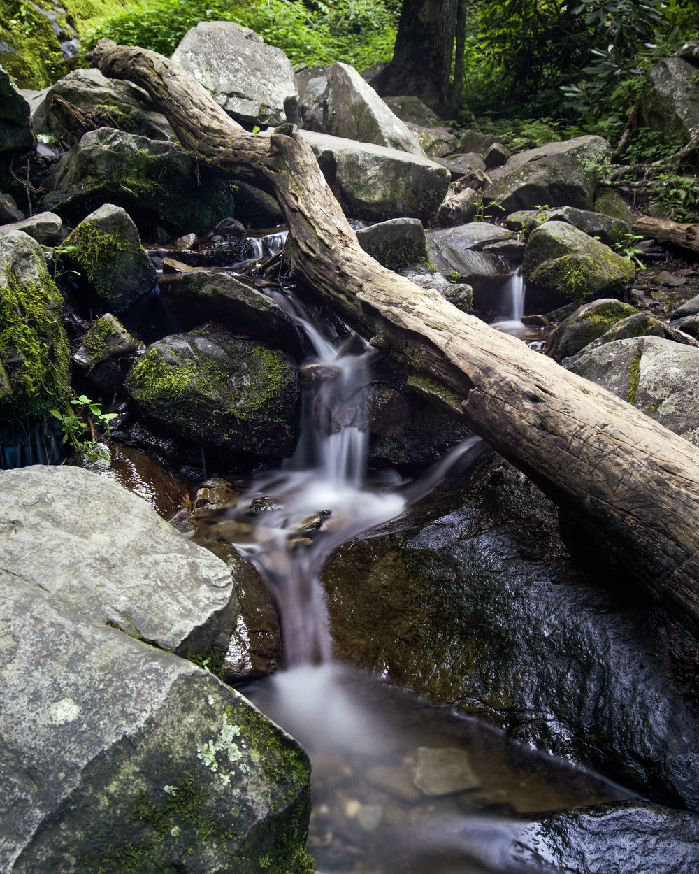Smoky Mountains Series-5.jpg