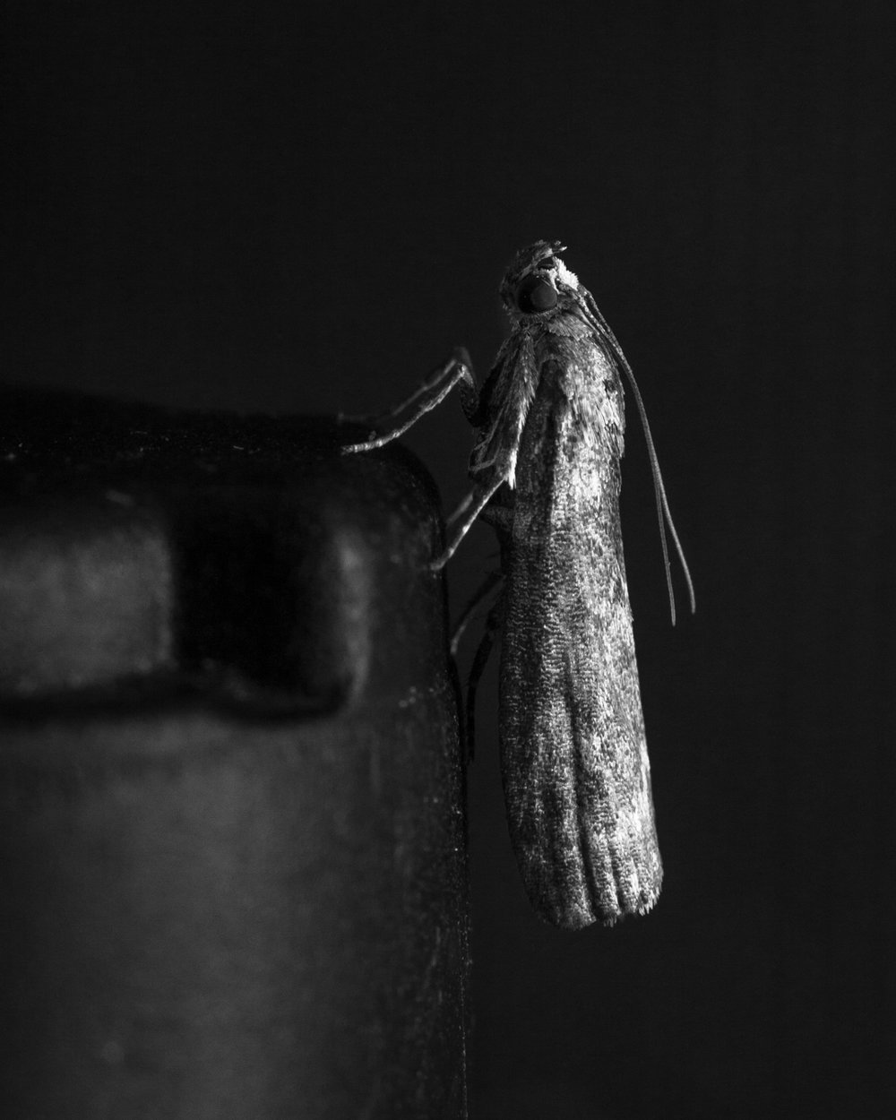 I underexposed this photo to black out the background, and to create more contrast between the moth and its surroundings