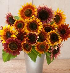 sunflower-autumn beauty.jpg