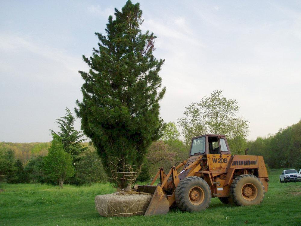 beech-tractor-edit.jpg