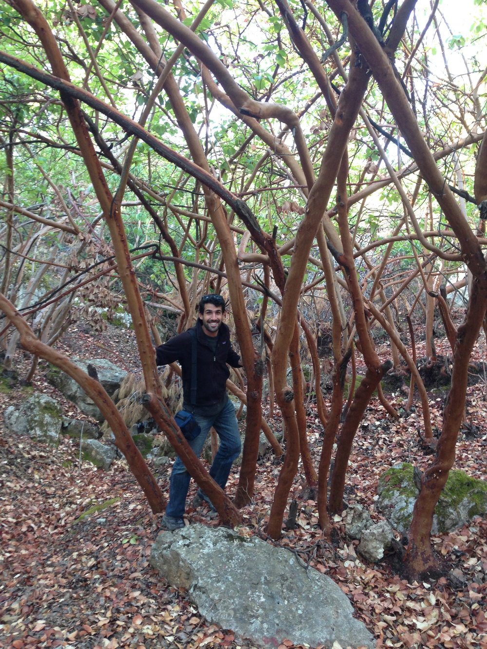 arbutus-andrachne-dibeen-forest-jordan.jpg