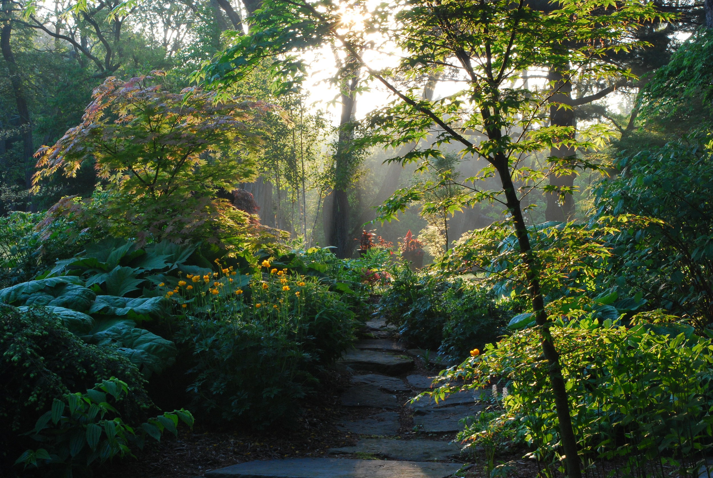 A stone path disappears through the lush growth of woodland perennials and trees at Stone Arches.