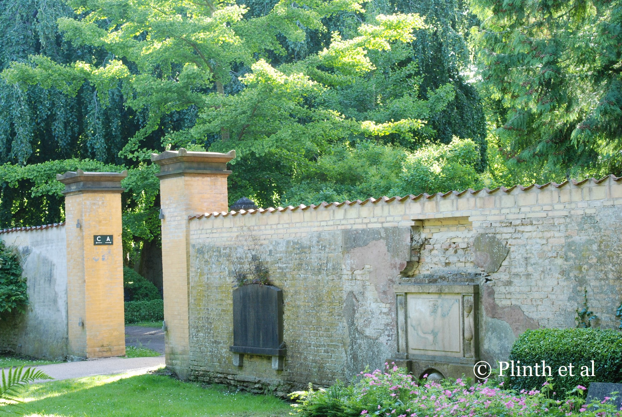 Here a beautiful old wall divides two sections; behind one can see a beautiful weeping Fagus sylvatica and a Gingko biloba.
