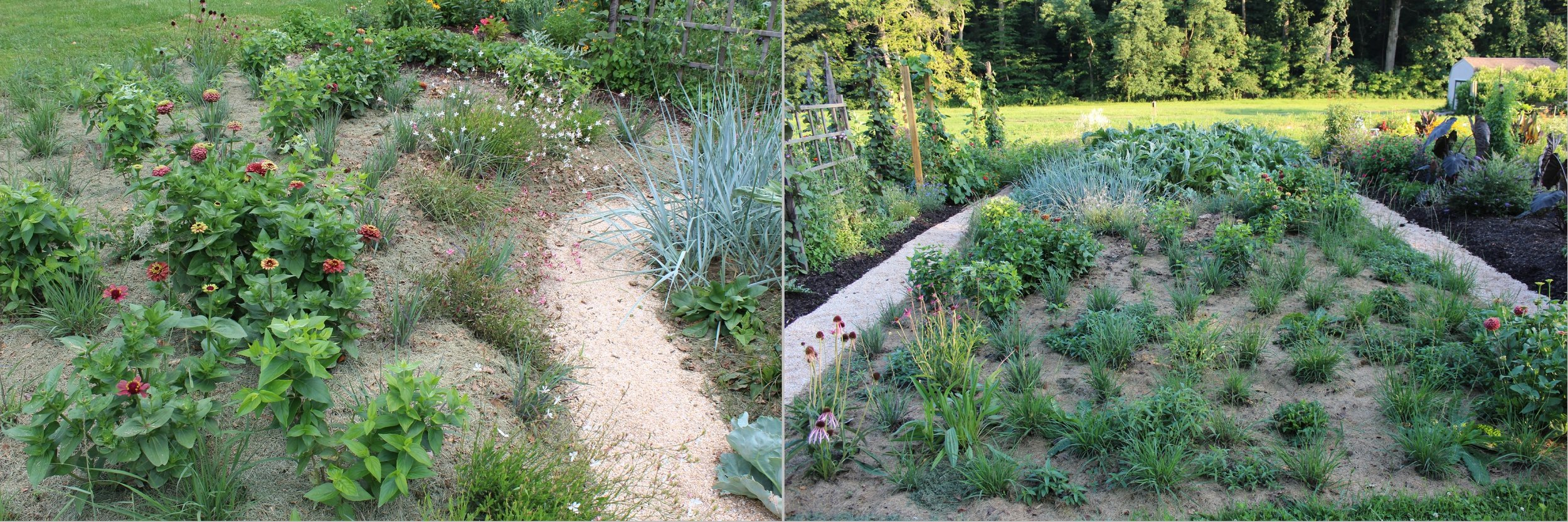 Given ideal conditions and no competition, plants can rapidly grow as if they are racing to take advantage over each other; here in July, Martha's plantings are beginning to fill out.